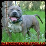RAZORS EDGE APOLLO