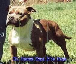 CH RAZORS EDGE INNA RAGE